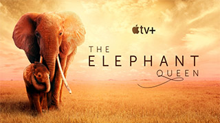 The Elephant Queen Torrent Downlaod