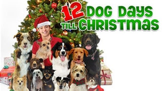 12 Dog Days Till Christmas bingtorrent