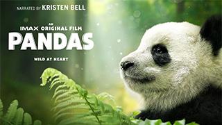 Pandas bingtorrent
