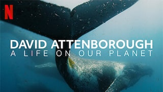 David Attenborough A Life On Our Planet Torrent